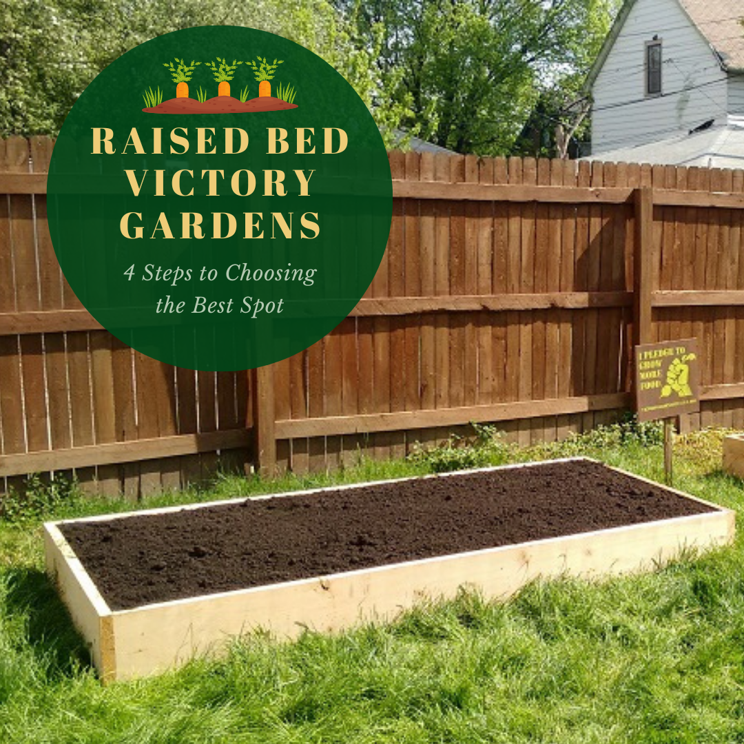where to build a Victory Garden raised bed